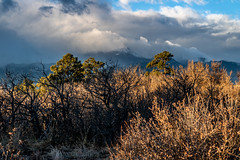 A-0929 (markbyzewski) Tags: sunrise palmerpark colorado coloradosprings tree sun cloud pikespeak mountain grass