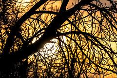 Waldmotive im Herbst_24-11-2019_0008 (Pixel-World) Tags: fototour spaziergang süntel wald weserbergland hessischoldendorf niedersachsen deutschland