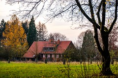 Waldmotive im Herbst_24-11-2019_0006 (Pixel-World) Tags: fototour spaziergang süntel wald weserbergland hessischoldendorf niedersachsen deutschland