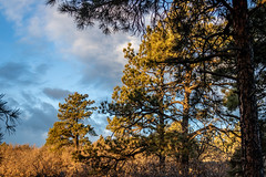 A-0921 (markbyzewski) Tags: sunrise palmerpark colorado coloradosprings tree sun cloud pikespeak mountain grass