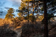 A-0920 (markbyzewski) Tags: sunrise palmerpark colorado coloradosprings tree sun cloud pikespeak mountain grass