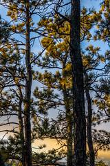 A-0919 (markbyzewski) Tags: sunrise palmerpark colorado coloradosprings tree sun cloud pikespeak mountain grass