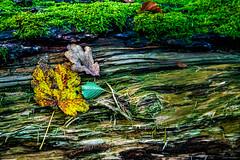 Waldmotive im Herbst_24-11-2019_0003 (Pixel-World) Tags: fototour spaziergang süntel wald weserbergland hessischoldendorf niedersachsen deutschland