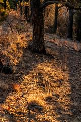 A-0917 (markbyzewski) Tags: sunrise palmerpark colorado coloradosprings tree sun cloud pikespeak mountain grass