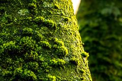 Waldmotive im Herbst_24-11-2019_0001 (Pixel-World) Tags: fototour spaziergang süntel wald weserbergland hessischoldendorf niedersachsen deutschland