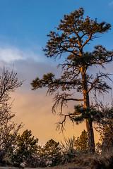 A-0910 (markbyzewski) Tags: sunrise palmerpark colorado coloradosprings tree sun cloud pikespeak mountain grass