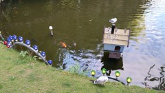 Birds and Fish (donXfive) Tags: year places copenhagen tivoligardens 2015 july month denmark