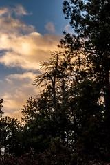 A-0909 (markbyzewski) Tags: sunrise palmerpark colorado coloradosprings tree sun cloud pikespeak mountain grass