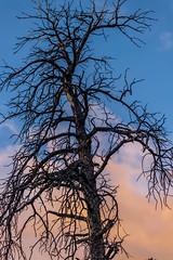 A-0907 (markbyzewski) Tags: sunrise palmerpark colorado coloradosprings tree sun cloud pikespeak mountain grass