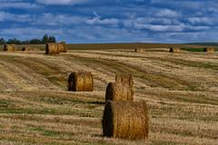 Golden Hay, North Dakota Highway 39 (Eric Seibert) Tags: ericseibert travelingnorthdakota septemberhay harvesttime seenontheroad blueskies americasbreadbasket northernplains rollinghills travelphotography nikonz7