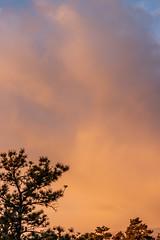 A-0903 (markbyzewski) Tags: sunrise palmerpark colorado coloradosprings tree sun cloud pikespeak mountain grass