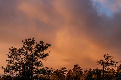A-0902 (markbyzewski) Tags: sunrise palmerpark colorado coloradosprings tree sun cloud pikespeak mountain grass