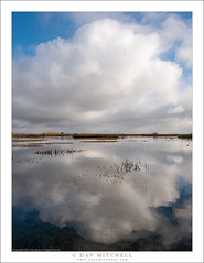 Pond, Clouds (G Dan Mitchell) Tags: central sanjoaquin valley late afternoon sky clouds towering fluffy horizon water pond wetlands reflection autumn fall season nature landscape california usa north america mnwr