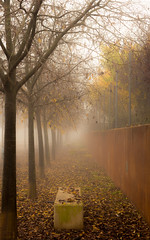Street in the fog. (Ricardo Pallejá) Tags: fall nikon new naturaleza nature fog d500 travel tree abandono abandoned turismo textura árbol antiguo light landscape lost luces lightroom lostplaces falset tarragona catalonia cataluña catalunya calle contrast texture decay melancholia blues otoño yellow mysterious