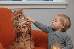Pull my finger (ragnaolof) Tags: baby boy cat pet cute