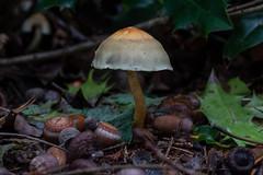 Mushy (Obas123) Tags: mushroom mushrooms fungus fungi nature forest macro