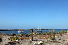 santa fe with Beagle and Samba anchored in the bay (xd_travel) Tags: 2014 galapagos mssamba equador msbeagle opuntia islasantafe barringtonbay