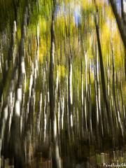 graphisme (penelope64) Tags: pyrénées pyrénéesatlantiques béarn lescun olympusem1 automne forêt