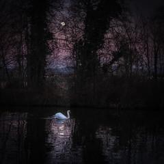 Yakamoz (Clydomatic) Tags: yakamoz canal nuit lune reflet eau arbres cygne