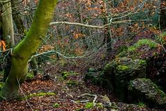 Waldmotive im Herbst_24-11-2019_0125 (Pixel-World) Tags: fototour spaziergang süntel wald weserbergland hessischoldendorf niedersachsen deutschland