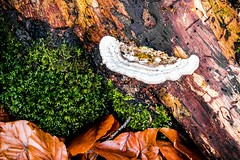 Waldmotive im Herbst_24-11-2019_0036 (Pixel-World) Tags: fototour spaziergang süntel wald weserbergland hessischoldendorf niedersachsen deutschland