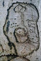 Waldmotive im Herbst_24-11-2019_0033 (Pixel-World) Tags: fototour spaziergang süntel wald weserbergland hessischoldendorf niedersachsen deutschland