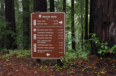 We Turned Right (LeftCoastKenny) Tags: henrycowellredwoodsstatepark trees brush ferns sign text drawings
