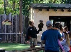 interaction (MoparMadman63) Tags: owl nature park dallaszoo zoo texas outdoors blade shade woman man girl boy group family wildlife bird