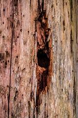 Waldmotive im Herbst_24-11-2019_0009 (Pixel-World) Tags: fototour spaziergang süntel wald weserbergland hessischoldendorf niedersachsen deutschland