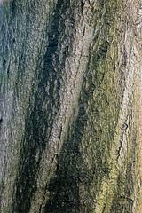 Waldmotive im Herbst_24-11-2019_0005 (Pixel-World) Tags: fototour spaziergang süntel wald weserbergland hessischoldendorf niedersachsen deutschland