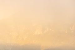 A-0915 (markbyzewski) Tags: sunrise palmerpark colorado coloradosprings tree sun cloud pikespeak mountain grass