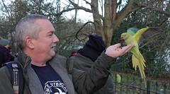 Me and a Ring-necked parakeet (ec1jack) Tags: hydepark royalparks westminster cityofwestminster london england britain uk europe ec1jack kierankelly december autumn park green birds parakeets wild ringneckedparakeets roseringed psittaculakramerimanillensis