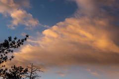 A-0905 (markbyzewski) Tags: sunrise palmerpark colorado coloradosprings tree sun cloud pikespeak mountain grass
