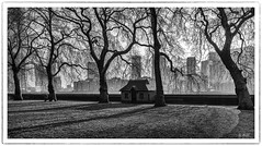 Pimlico London (robert.french57 French Images) Tags: 493mg41808 rjf monochrome black white bw london uk pimlico thames sl trees walking winter 500pxcomrobert114