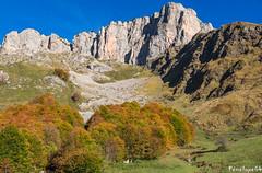 Les orgues de Camplong (penelope64) Tags: pyrénées pyrénéesatlantiques béarn lescun orguesdecamplong olympusem1 panoramique falaises automne forêt