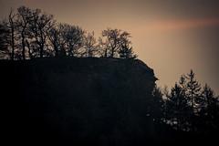 Waldmotive im Herbst_24-11-2019_0121 (Pixel-World) Tags: fototour spaziergang süntel wald weserbergland hessischoldendorf niedersachsen deutschland