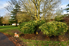 Sunny day in December (Caulker) Tags: canonspark sky bushes trees dog