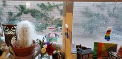 December 13, 2019 (29) (gaymay) Tags: california desert gay love palmsprings riversidecounty coachellavalley sonorandesert decoration cactus socks owl flowers