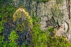 Waldmotive im Herbst_24-11-2019_0035 (Pixel-World) Tags: fototour spaziergang süntel wald weserbergland hessischoldendorf niedersachsen deutschland