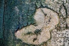 Waldmotive im Herbst_24-11-2019_0034 (Pixel-World) Tags: fototour spaziergang süntel wald weserbergland hessischoldendorf niedersachsen deutschland