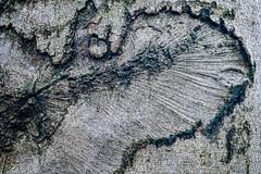 Waldmotive im Herbst_24-11-2019_0031 (Pixel-World) Tags: fototour spaziergang süntel wald weserbergland hessischoldendorf niedersachsen deutschland