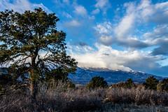 A-0940 (markbyzewski) Tags: sunrise palmerpark colorado coloradosprings tree sun cloud pikespeak mountain grass