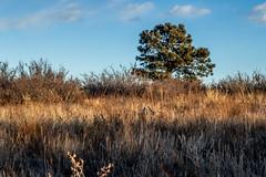 A-0936 (markbyzewski) Tags: sunrise palmerpark colorado coloradosprings tree sun cloud pikespeak mountain grass