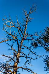 A-0933 (markbyzewski) Tags: sunrise palmerpark colorado coloradosprings tree sun cloud pikespeak mountain grass