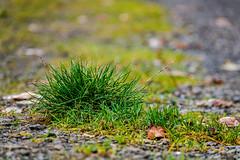 Waldmotive im Herbst_24-11-2019_0013 (Pixel-World) Tags: fototour spaziergang süntel wald weserbergland hessischoldendorf niedersachsen deutschland
