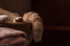Pieces of Truffle - Happy Caturday! (Irina1010) Tags: tail paw truffle cat pet caturday pieces