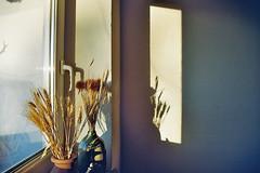a good day (Ralaphotography) Tags: sunny morning light shadow silhouette window home film analog analogue 35mm plants decor winter season autumn fall