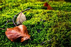 Waldmotive im Herbst_24-11-2019_0004 (Pixel-World) Tags: fototour spaziergang süntel wald weserbergland hessischoldendorf niedersachsen deutschland