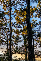A-0918 (markbyzewski) Tags: sunrise palmerpark colorado coloradosprings tree sun cloud pikespeak mountain grass