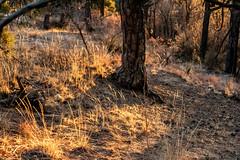 A-0916 (markbyzewski) Tags: sunrise palmerpark colorado coloradosprings tree sun cloud pikespeak mountain grass